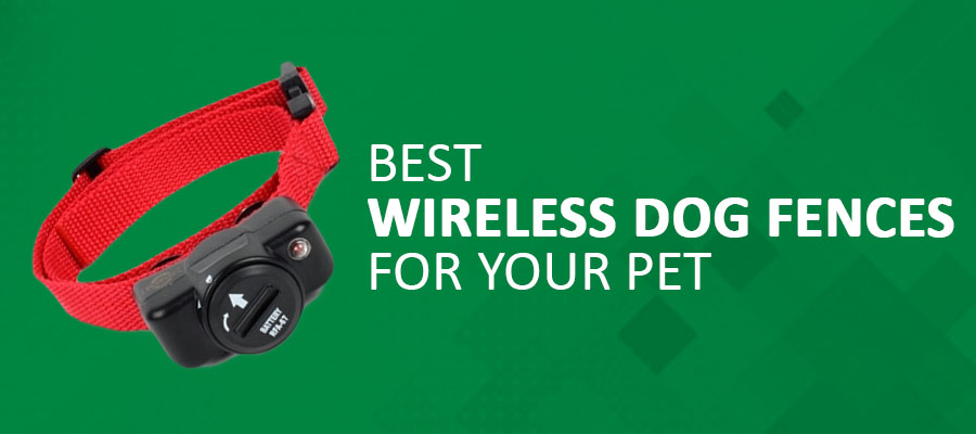 Best Wireless Dog Fences For Your Pet